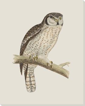 Hoot Owl Bird 3 Wrapped Canvas Giclee Print Wall Art