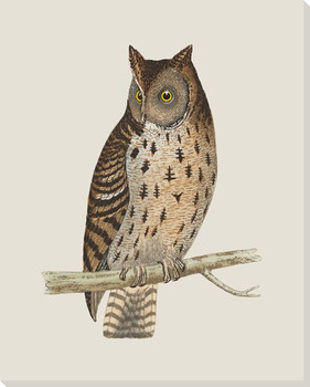Hoot Owl Bird 6 Wrapped Canvas Giclee Print Wall Art