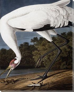 Hooping Crane Bird Wrapped Canvas Giclee Print Wall Art