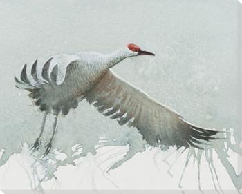 Sandhill Crane Bird Wrapped Canvas Giclee Print Wall Art