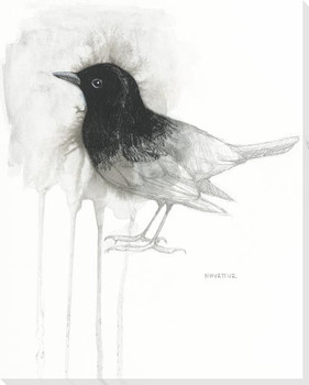 Blackbird Study Wrapped Canvas Giclee Art Print Wall Art