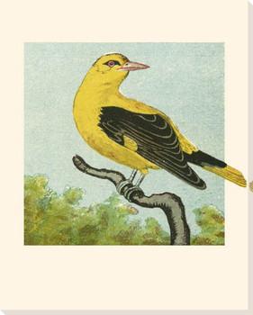 Mini Vintage Birds VI Wrapped Canvas Giclee Print Wall Art