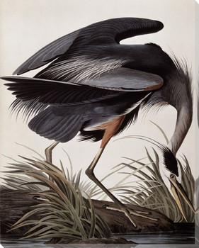 Great Blue Heron Bird Wrapped Canvas Giclee Print Wall Art