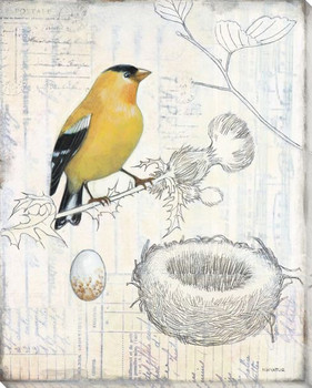 Aviary Bird Scrapbook I Wrapped Canvas Giclee Print Wall Art