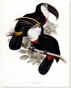 Culmenated Toucan Birds Wrapped Canvas Giclee Print Wall Art