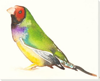 Gouldian Finch Bird Wrapped Canvas Giclee Art Print Wall Art