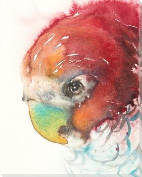 Gang Gang Parrot Bird Wrapped Canvas Giclee Art Print Wall Art