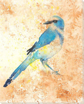 Florida Scrub Jay Bird Wrapped Canvas Giclee Art Print Wall Art