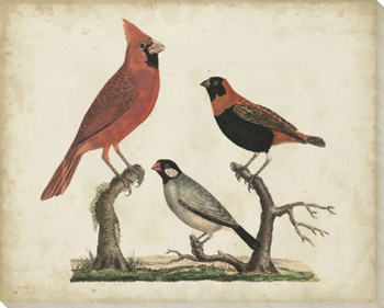 Cardinal and Grosbeak Birds Wrapped Canvas Giclee Print Wall Art