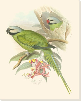 Small Birds of the Tropics II Wrapped Canvas Giclee Print Wall Art