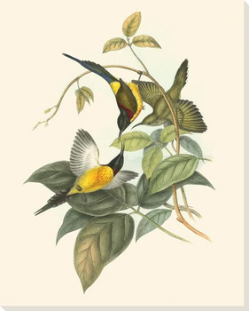 Small Birds of the Tropics IV Wrapped Canvas Giclee Print Wall Art
