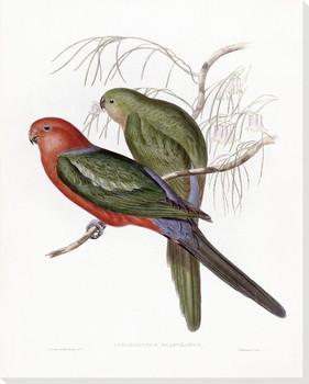 Aprosmictus Scapulatus Two Birds Wrapped Canvas Giclee Print Wall Art