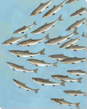 School of Fish I Wrapped Canvas Giclee Print Wall Art