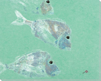 Knobhead Porgy Fish Wrapped Canvas Giclee Print Wall Art