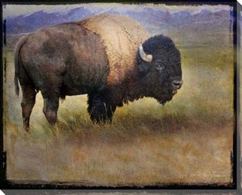 Bison Portrait II Wrapped Canvas Giclee Print Wall Art