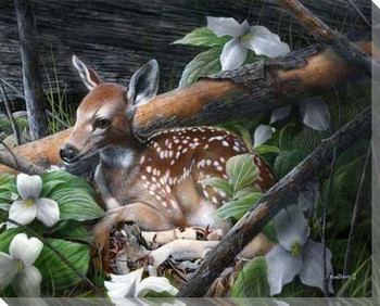 Undercover Deer I Wrapped Canvas Giclee Print Wall Art