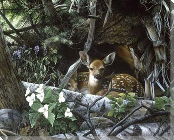 Undercover Deer II Wrapped Canvas Giclee Print Wall Art