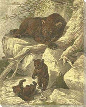 Small Brown Bear with Cubs Wrapped Canvas Giclee Print Wall Art