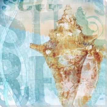 Seashells 4 Wrapped Canvas Giclee Print Wall Art