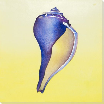 Blue Conch Shell Wrapped Canvas Giclee Print Wall Art