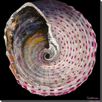 Pink Turbo Shell 2 Wrapped Canvas Giclee Print Wall Art