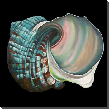 Turquoise Turbo Shell Wrapped Canvas Giclee Print Wall Art