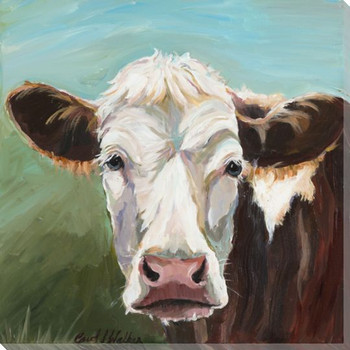 Marvin White Face Cow Wrapped Canvas Giclee Print Wall Art