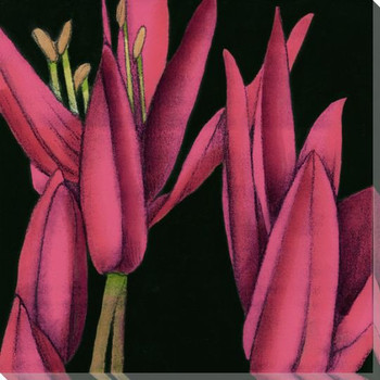 Pink Graphic Lily Flower TR Wrapped Canvas Giclee Print Wall Art