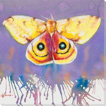 Lo Moth Wrapped Canvas Giclee Print Wall Art