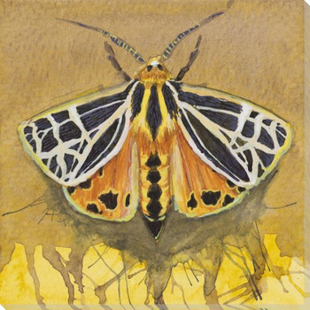 Tiger Moth Wrapped Canvas Giclee Print Wall Art