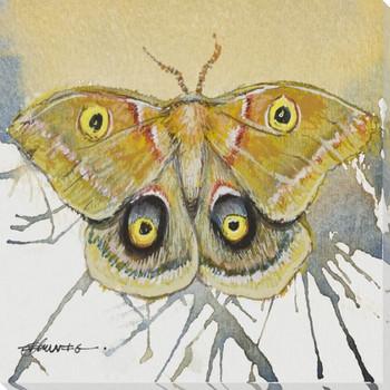 Polyphemus Moth Wrapped Canvas Giclee Print Wall Art