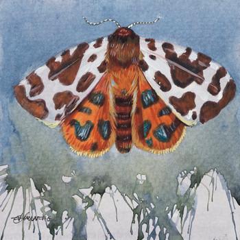 Garden Tiger Moth Wrapped Canvas Giclee Print Wall Art