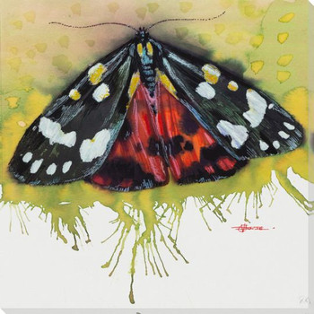 Scarlet Tiger Moth Wrapped Canvas Giclee Print Wall Art