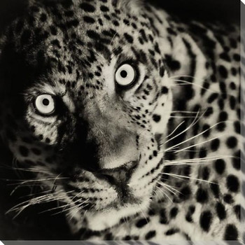 Leopard Eyes Wrapped Canvas Giclee Art Print Wall Art
