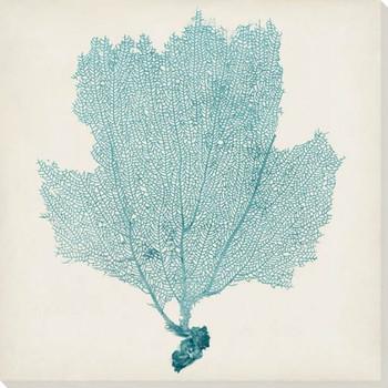 Sea Fan III Wrapped Canvas Giclee Print Wall Art