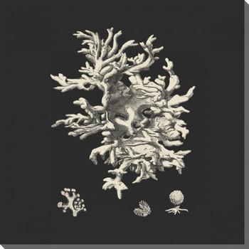 Black & Tan Coral III Wrapped Canvas Giclee Print Wall Art
