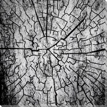 Tree Ring 2 Wrapped Canvas Giclee Print Wall Art