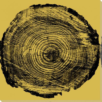 Nature Grouping Tree Rings Wrapped Canvas Giclee Print Wall Art