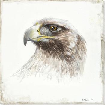 Golden Eagle Bird Sketch Wrapped Canvas Giclee Print Wall Art