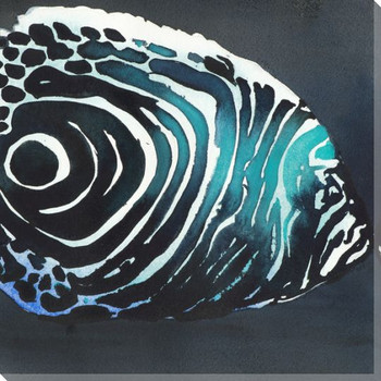 Zebra Fish Wrapped Canvas Giclee Print Wall Art