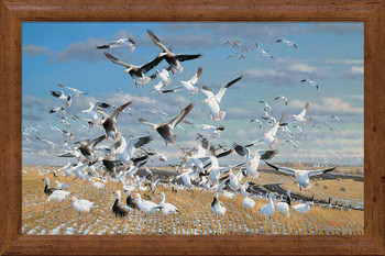 Canadian Gold Snow Geese Framed Canvas Giclee Art Print Wall Art