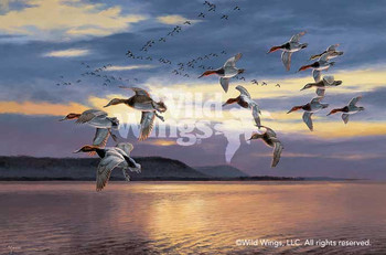 Daybreak at Lake Pepin Canvasback Canvas Giclee Art Print Wall Art