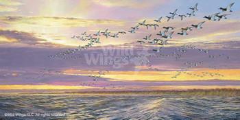 Grand Passage Canvasback Ducks Canvas Giclee Art Print Wall Art