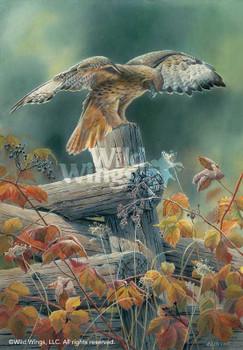 Touchdown Red Tailed Hawk Bird Artist Proof Art Print Wall Art