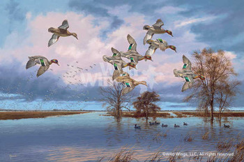 Arkansas Reverie Flying Ducks Canvas Giclee Art Print Wall Art