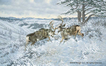 Battling Bucks Mule Deer Canvas Giclee Art Print Wall Art