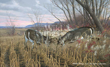 Battling Bucks Whitetail Deer Canvas Giclee Art Print Wall Art
