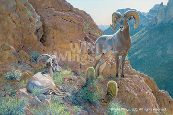 The Overseer Desert Bighorn Sheep Canvas Giclee Art Print Wall Art