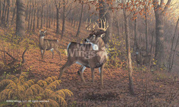 Fall Rut Whitetail Deer Art Print Wall Art