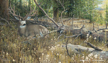 Blow Down Buck Mule Deer Canvas Giclee Art Print Wall Art